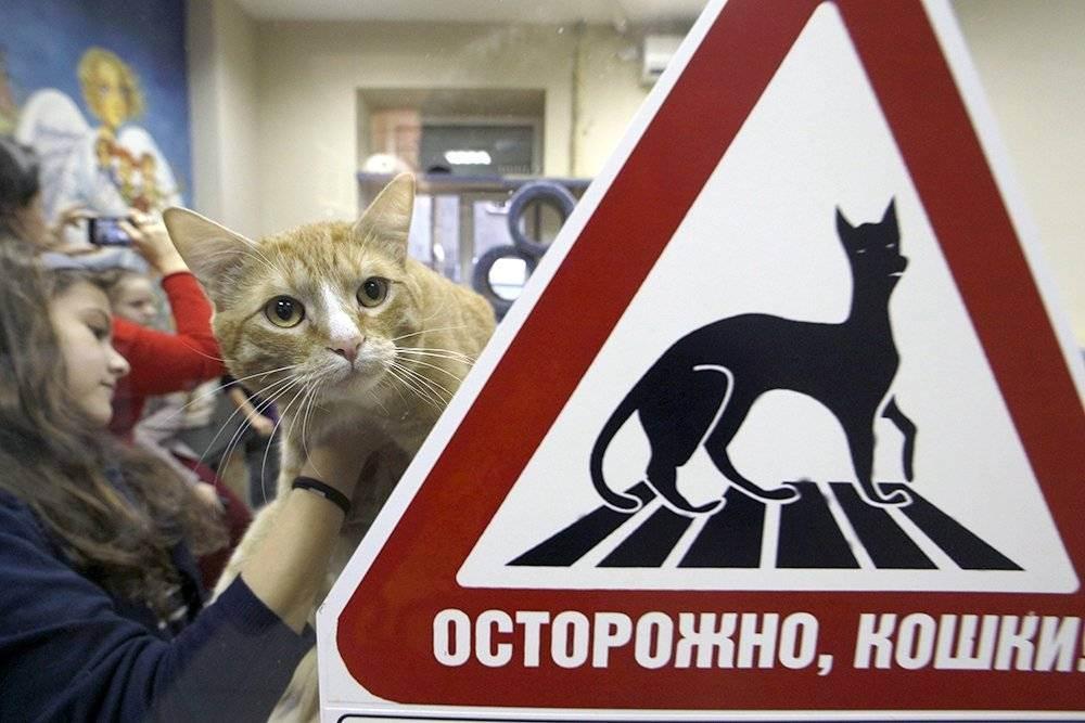 Где лучше покупать животное: у заводчика или в питомнике? — статьи — rex24.ru: домашние животные, выбор, уход и воспитание, каталог компаний, эксперты.