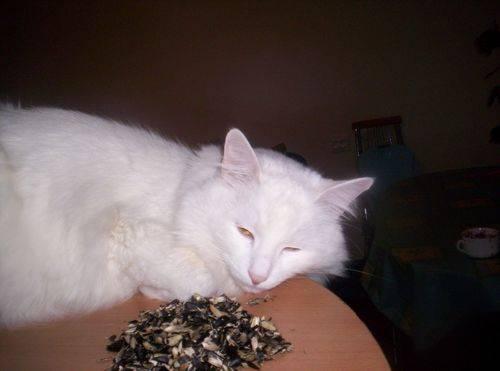 Кот или кошка ест землю — почему и что делать?