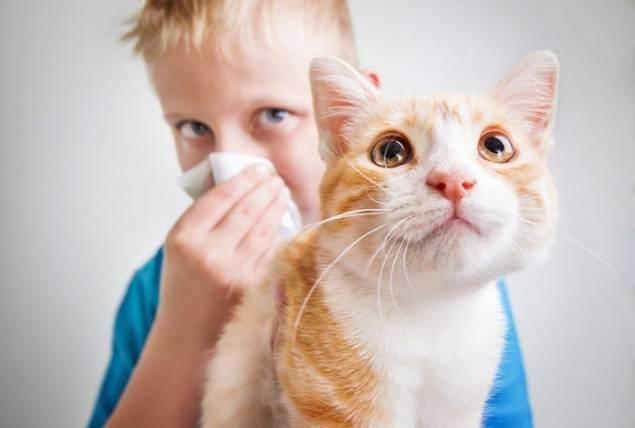 Аллергические реакции на кошек: симптомы и лечение