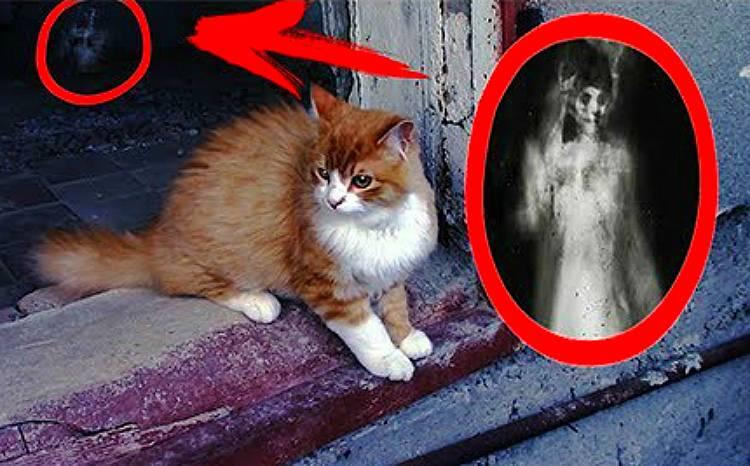 Может ли душа умершего переселиться в кошку: различные теории реинкарнации