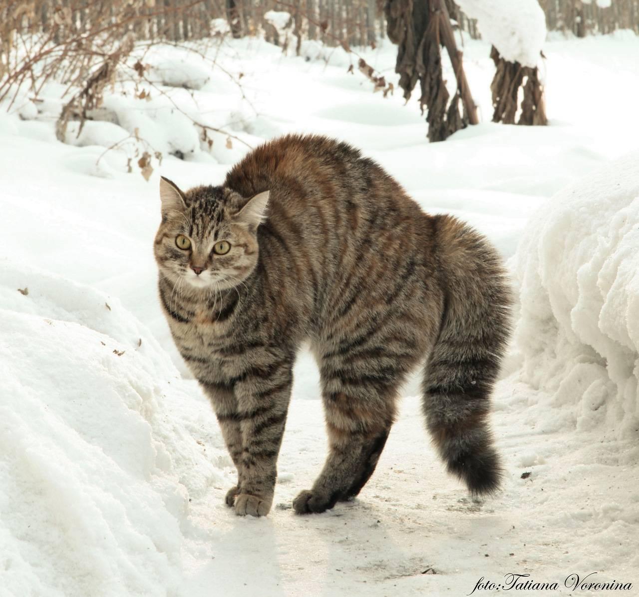 Почему шипит кошка и что делать хозяину?