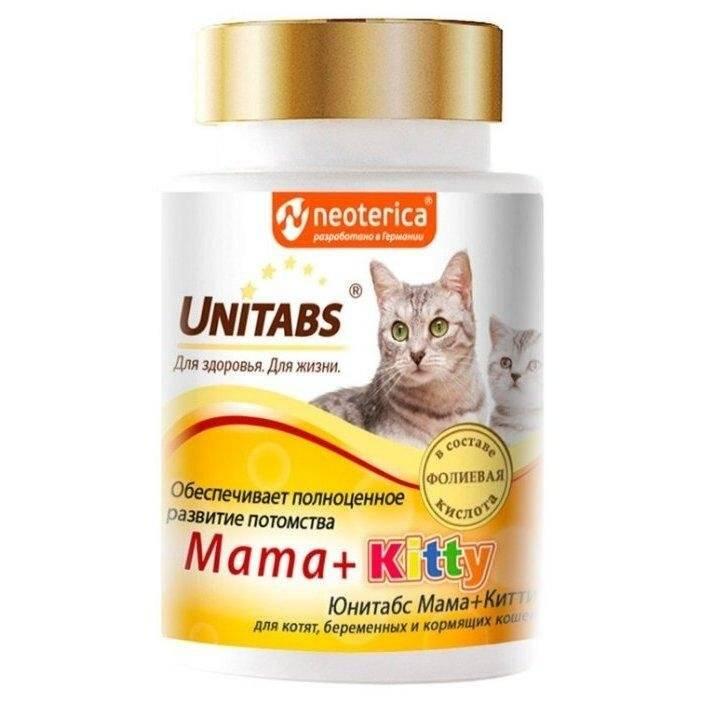 6 лучших витаминов для кошек