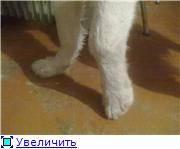 У кота опухла задняя лапа и он хромает что делать