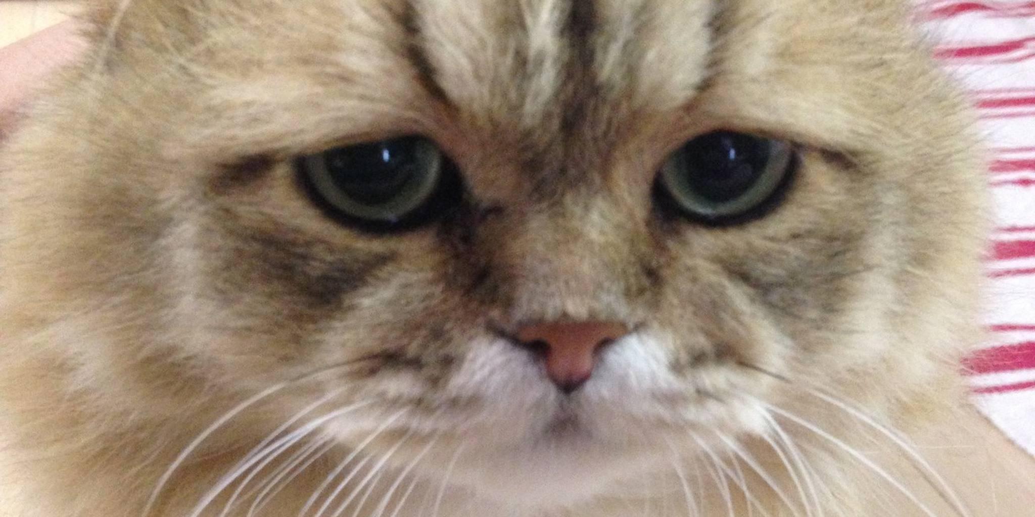 Плачут ли кошки