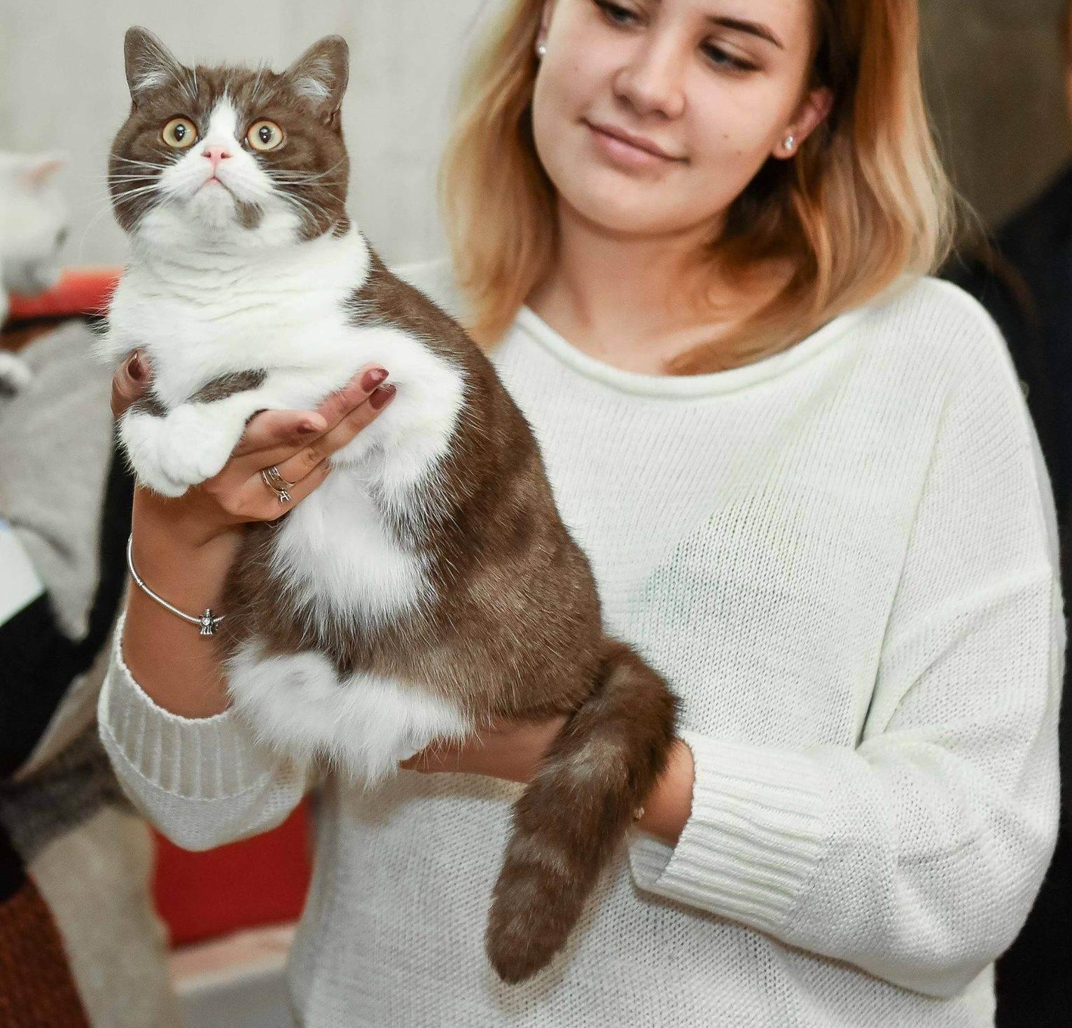 Как открыть питомник кошек: оборудование и необходимые документы для старта