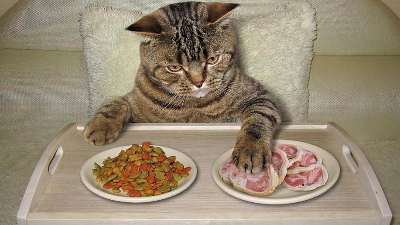 В каких странах едят кошек и почему