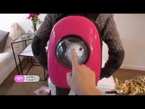 Советы по выбору переноски-рюкзака для кошек