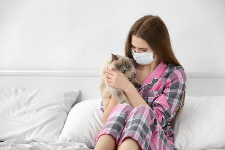 Почему кошка чихает - причины и лечение. чихание у кошек, почему кошка часто чихает и у нее слезятся глаза. - petstime.ru