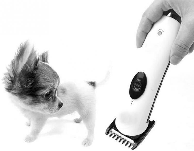 Стрижки кошек в домашних условиях. машинка для стрижки кошек :: syl.ru