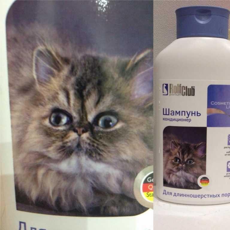 Шампунь для кошек – какое средство выбрать для мытья короткошерстного, длинношерстого и лысого животного?