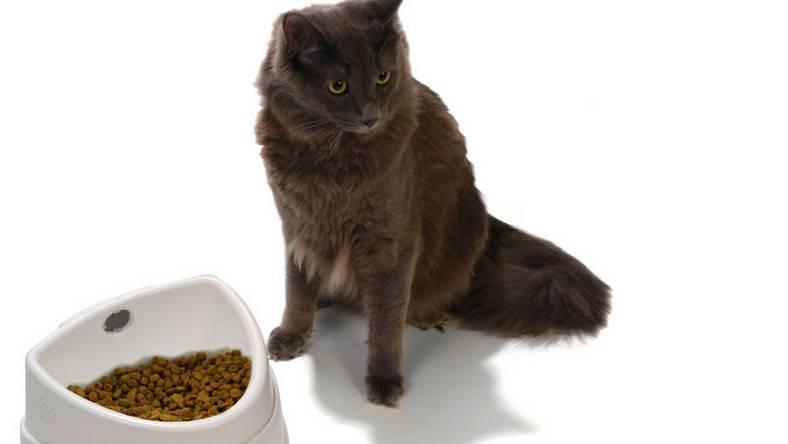 Можно ли кормить кошку сухим и влажным кормом одновременно: рассказываем подробно и понятно