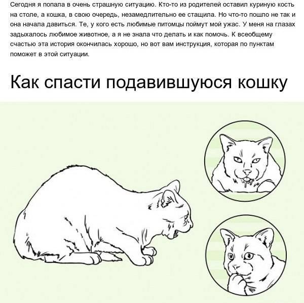 Что делать если, кот подавился рыбной костью или чем-то другим, как помочь животному?