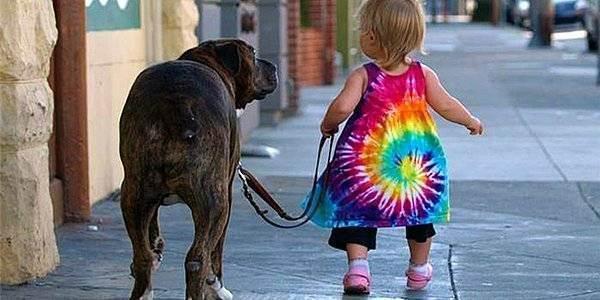 Факты о пользе собак