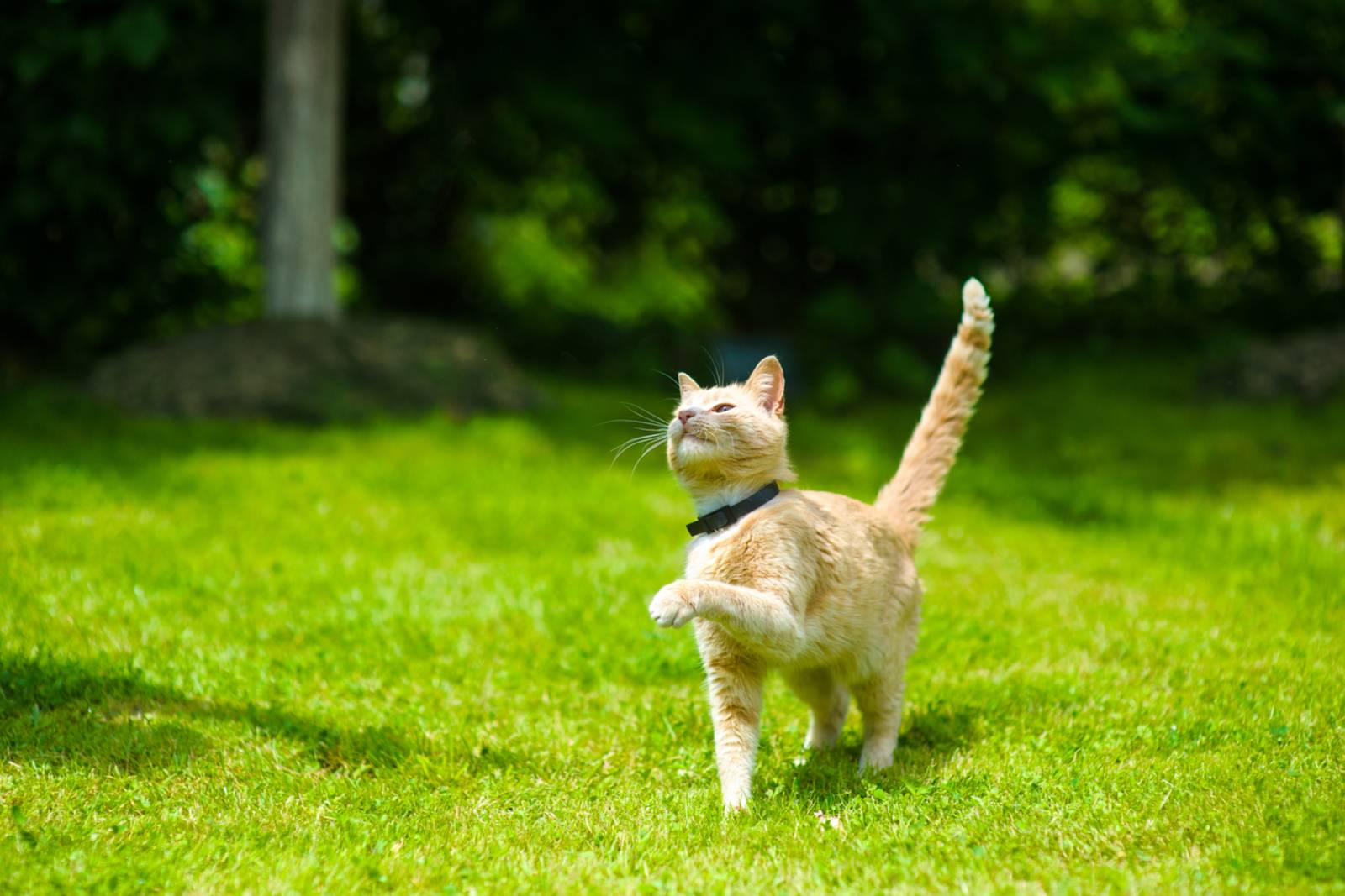 Что делать если кошка загуляла первый раз - oozoo.ru