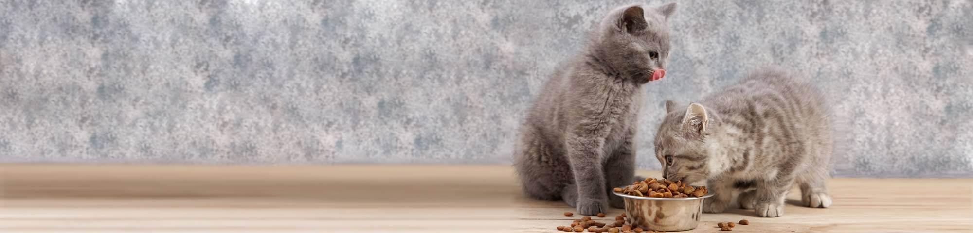 Можно ли коту сырую рыбу. можно ли кошкам рыбу – за и против. правила сбалансированного питания