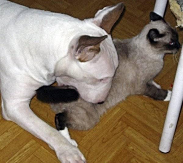 Препараты для кошек от течки: изучаем суть
