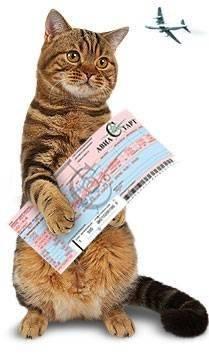Как правильно перевозить кошек и котов