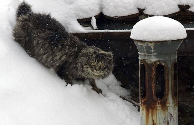 Кошка мёрзнет