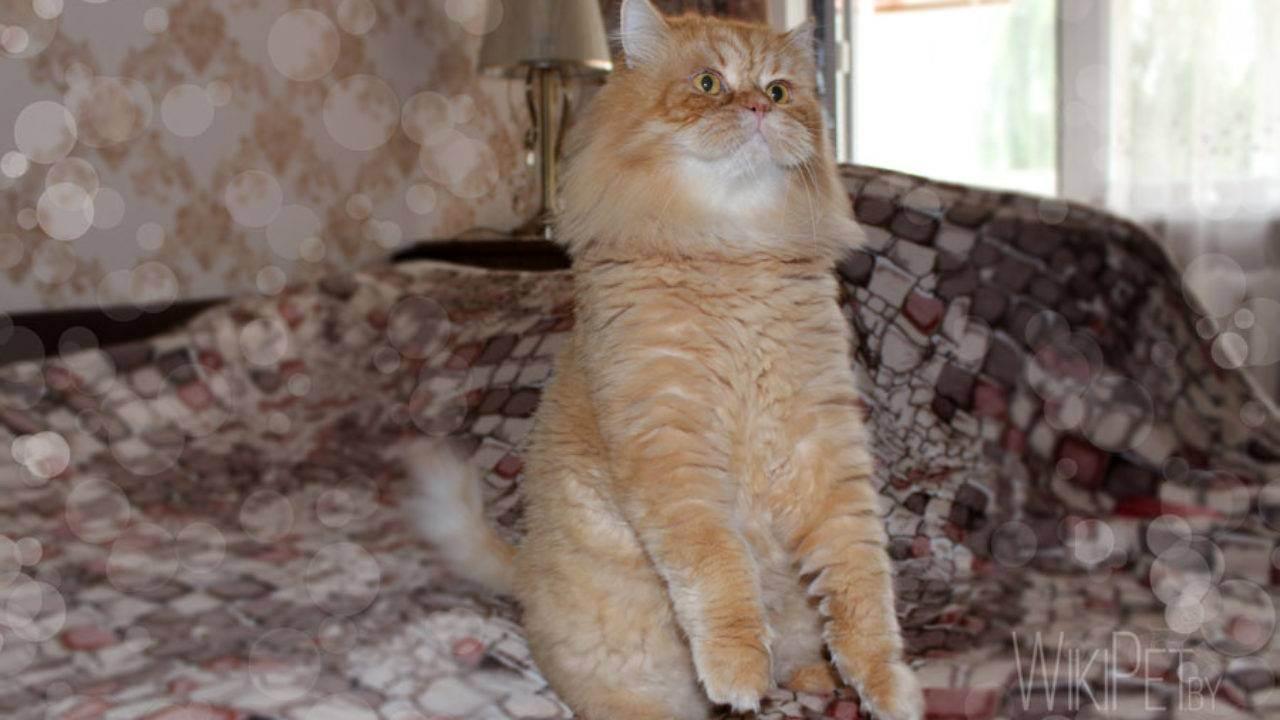 Можно ли кошку при аллергии