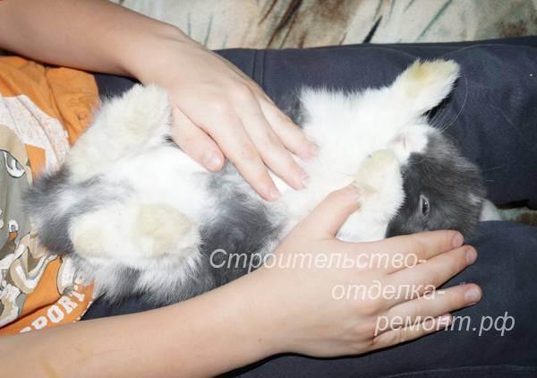 У кошки раздувается живот после еды. вздутие живота у кошки