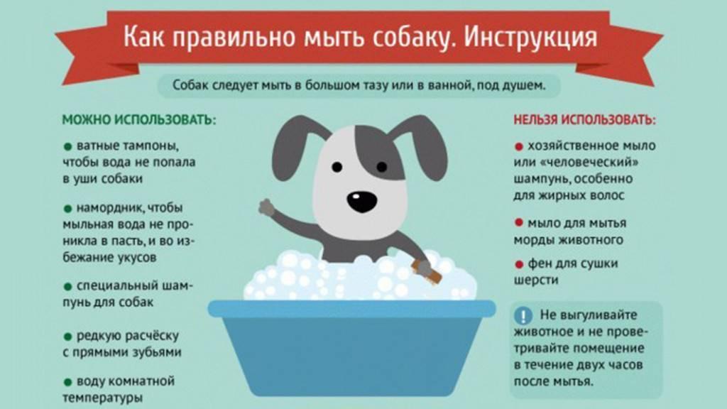 Как правильно помыть кошку