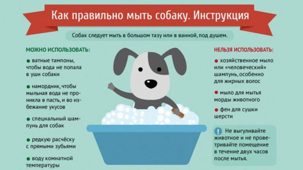 При какой температуре купать кошку - oozoo.ru