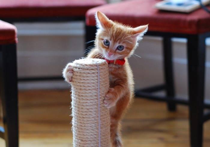 Как приучить котенка к когтеточке: 8 простых шагов