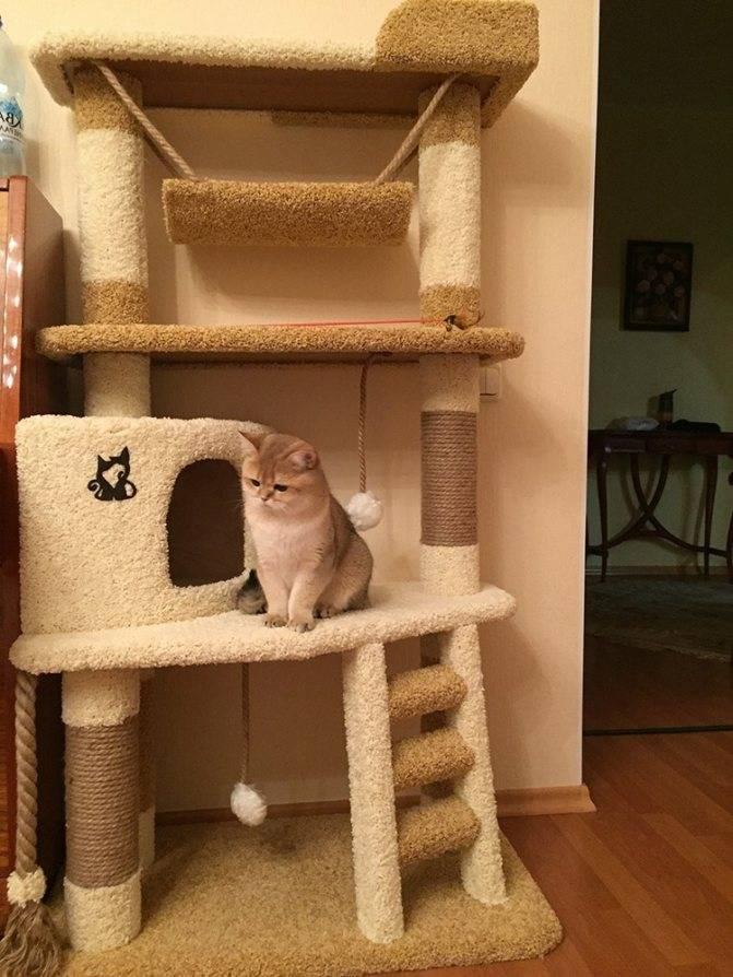 Когтеточка для кошек своими руками: как сделать самодельное приспособление в домашних условиях?