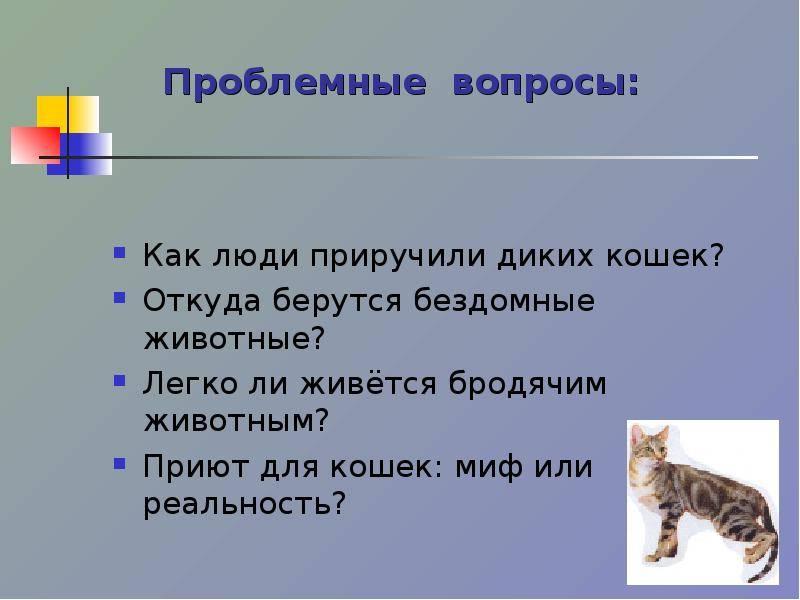 Как найти общий язык с кошкой или котом   как научиться ладить и подружиться