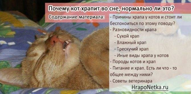 Кошка хрюкает при дыхании: основные причины кошка хрюкает при дыхании: основные причины