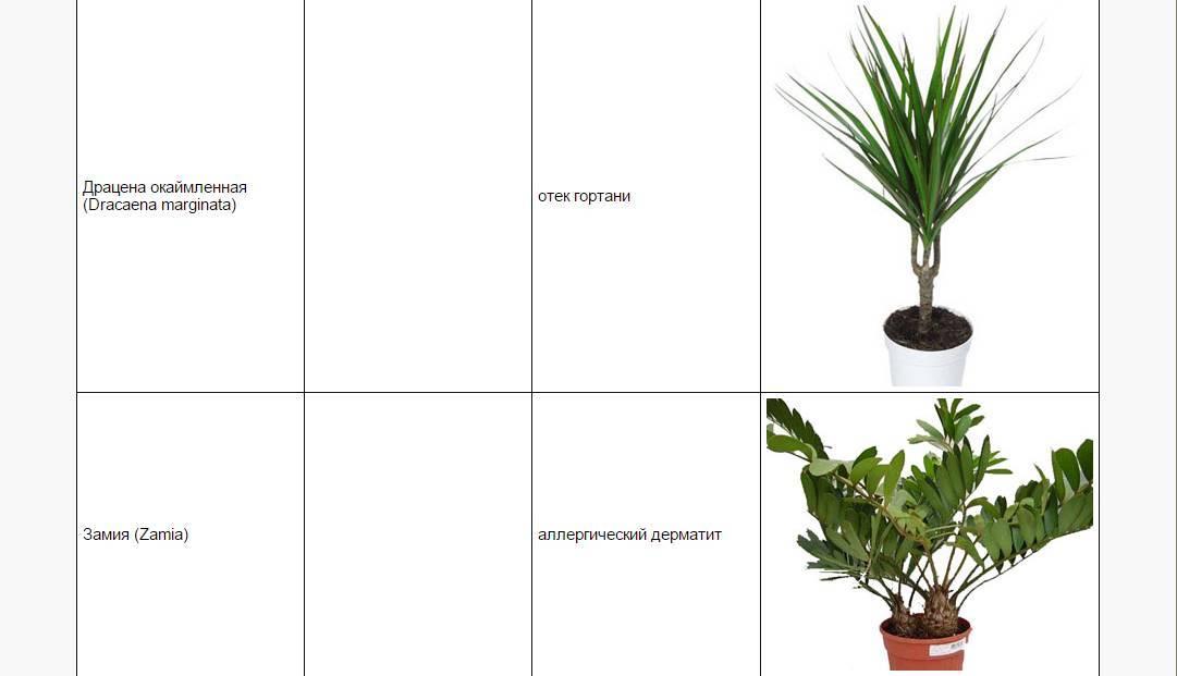 Красота и коварство — ядовитые растения в садовом дизайне. названия и описания опасных растений и цветов. фото — ботаничка.ru