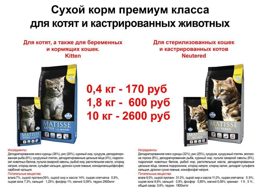 Классы кормов для кошек, классификация по категориям и видам, советы ветеринаров по выбору кошачьего питания