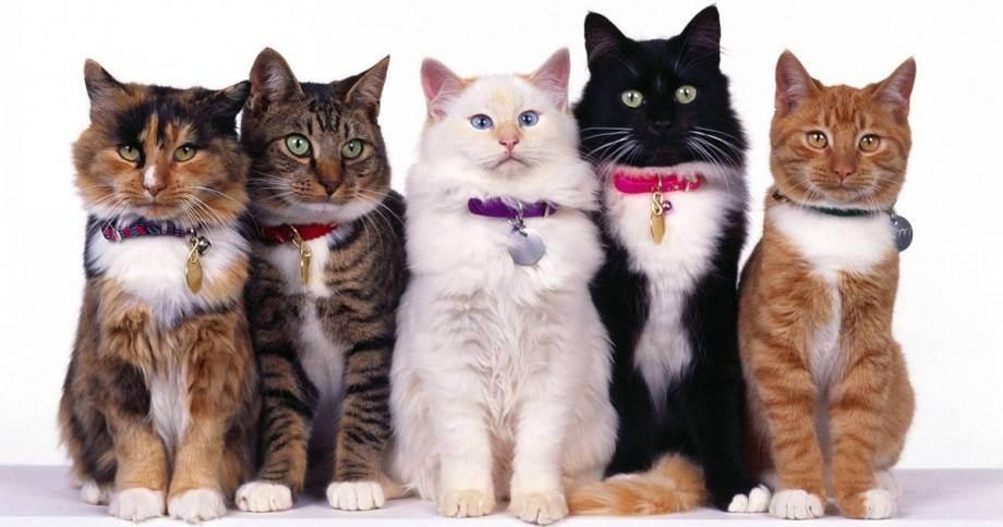 Целительная сила кошек