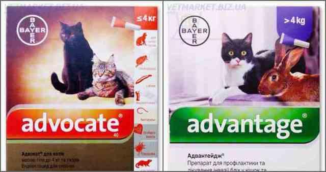 Какие капли лучше для котят от блох