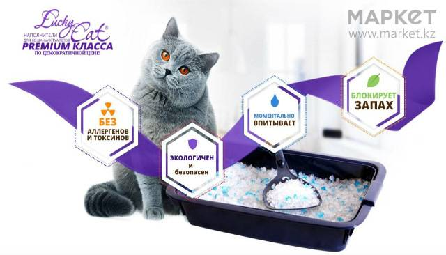 Какой наполнитель лучше для котят? советы по выбору наполнителя для котенка   cat step