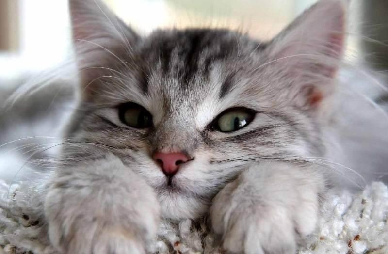 Почему кот катается на попе. почему кошка ездит на попе: выясняем причины недомогания