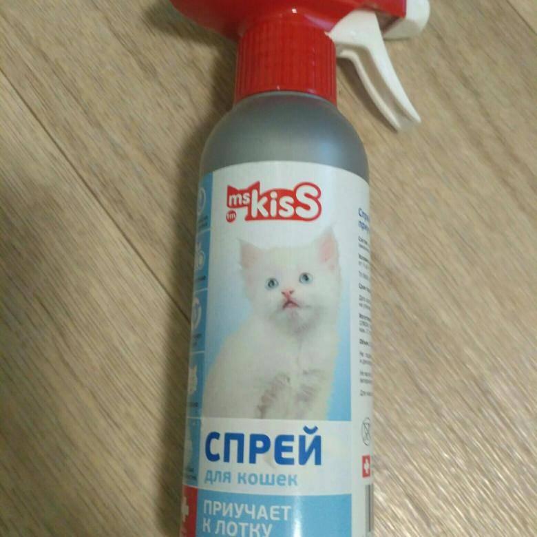 Как приучить котенка к лотку в квартире быстро и без помощи специалиста, выбор наполнителя и лотка, почему котенок делает ошибки