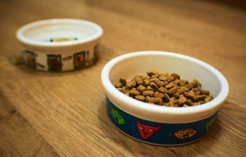 Миски для кошек (28 фото): интеллектуальные кормушки с ковриком и миски на подставке, керамические миски и другие варианты для кота и котят. какую лучше выбрать?
