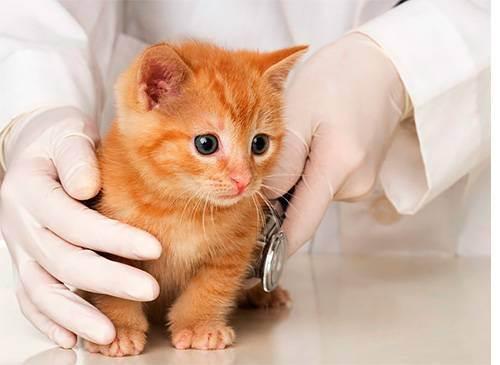 Вакцинация домашних животных: основные правила