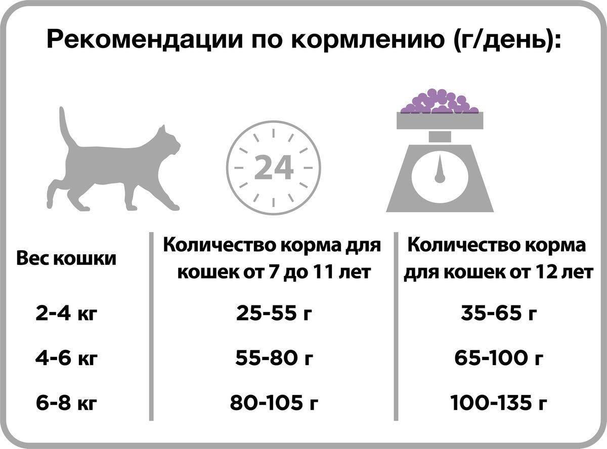 Сколько раз в день нужно кормить взрослую кошку