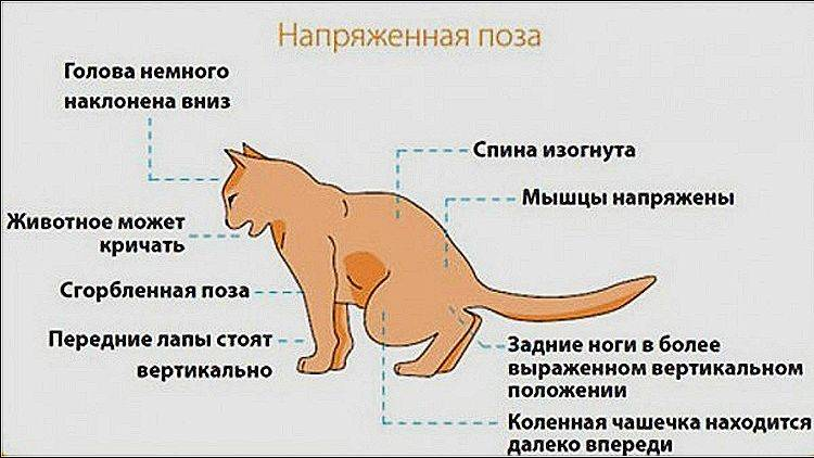 Кот дергается во сне: почему и что делать?