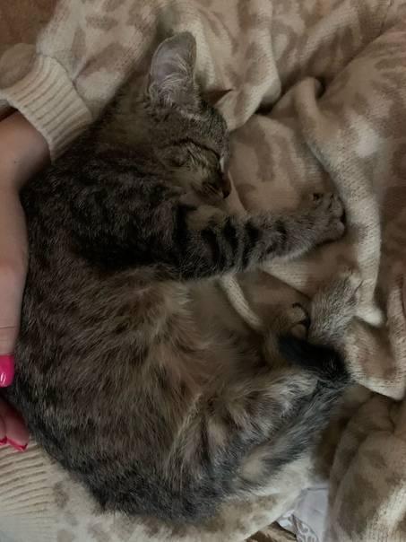 Как воспитывать кошку в домашних условияхтобы сделать ласковой