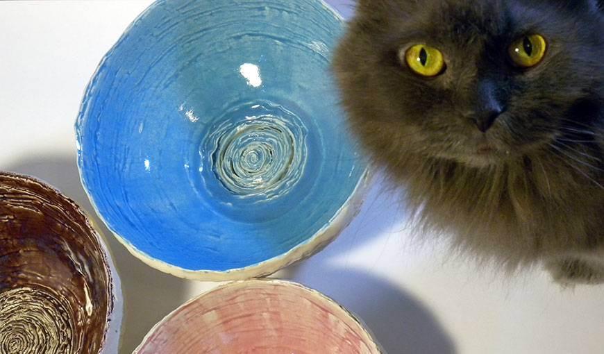 Миски и кормушки для кошек: что выбрать?