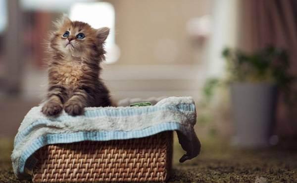 Котёнок первый день в новом доме