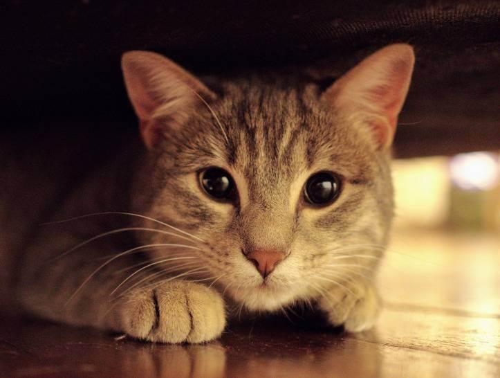 И снова вредные котики: как убрать запах кошачьей мочи с ковра