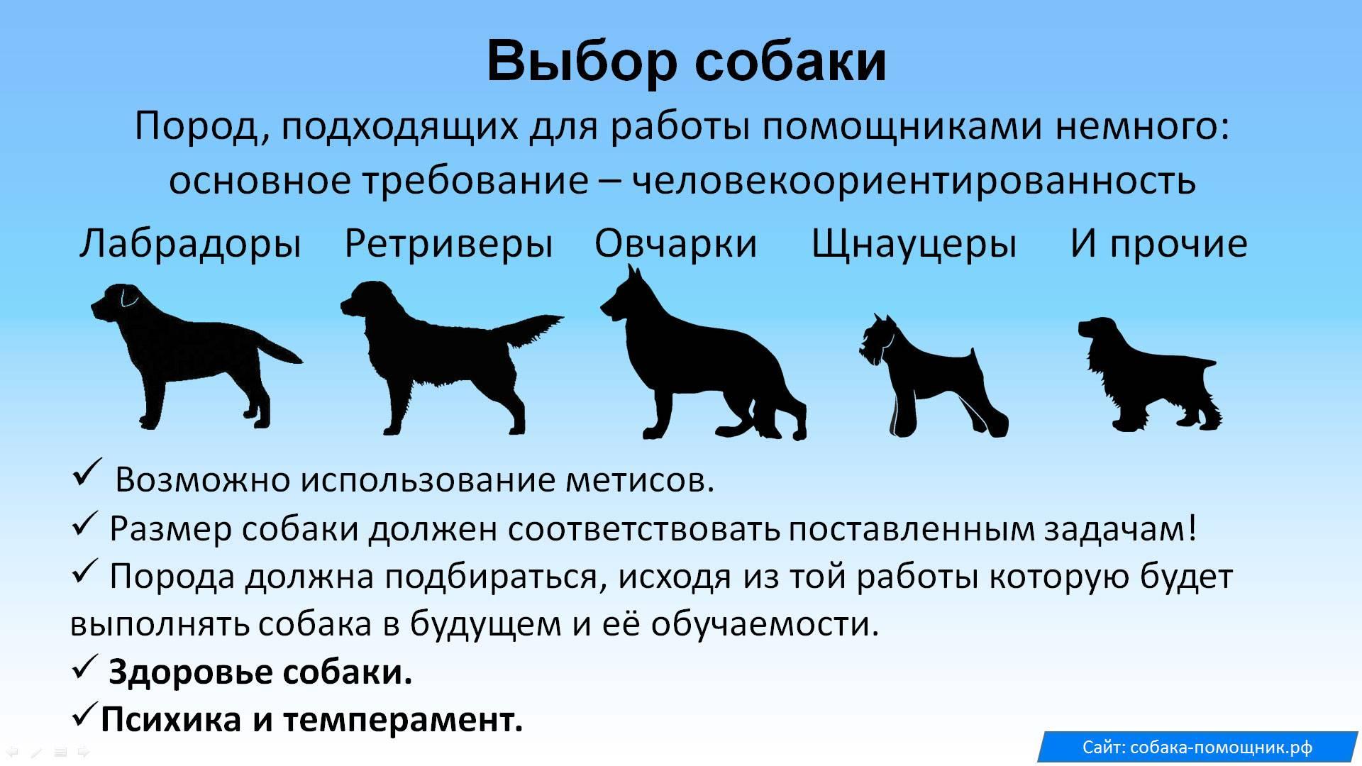 Почему собаки считаются инфернальными животными