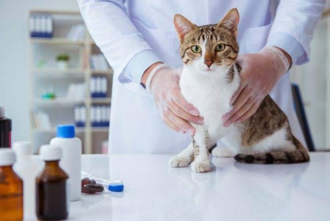 Куда колоть катозал. ветеринарное средство 'катозал'