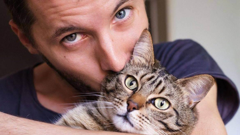 Чем полезны кошки для здоровья человека. какая польза от кошки в квартире. польза кошек для здоровья психической сферы