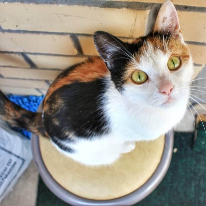 Приметы о трехцветной кошке в доме