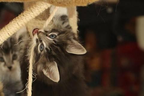 Как приучить котенка к когтеточке: быстро прививаем полезные навыки